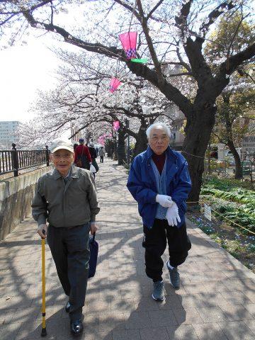 桜並木を散策